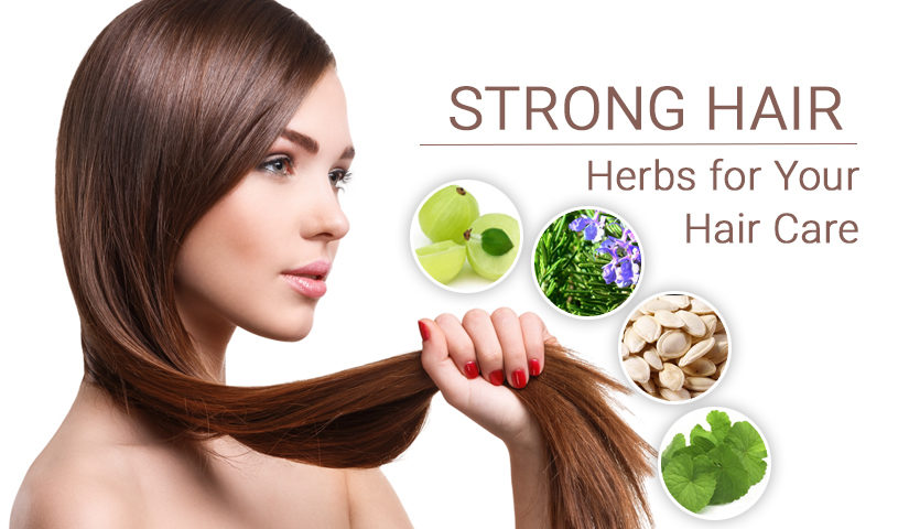6fd927445f35 5 Proven Herbs and Oils For Beautiful and Stronger Hair - Herbline